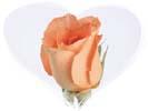 rosebuds_t1.jpg